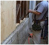 Pest and Dry Root Repair